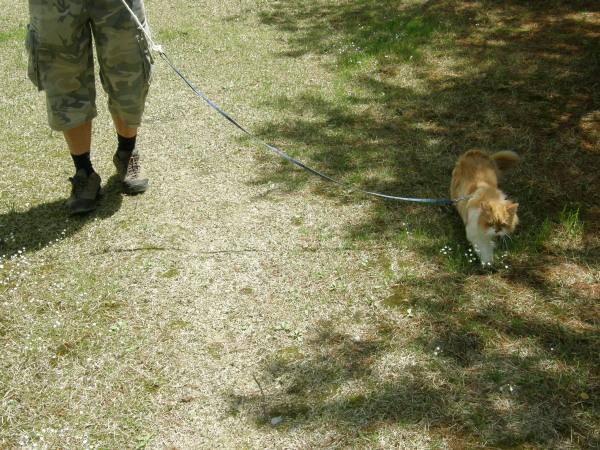 고양이와 산책하기