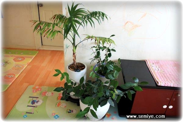 식물-허브-관엽식물-동양란-아파트 식물기르기-실내화단-아파트-공기정화식물-애완식물