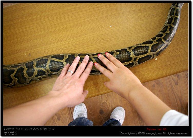 이 뱀을 목에 걸기도한다 ㄷㄷ