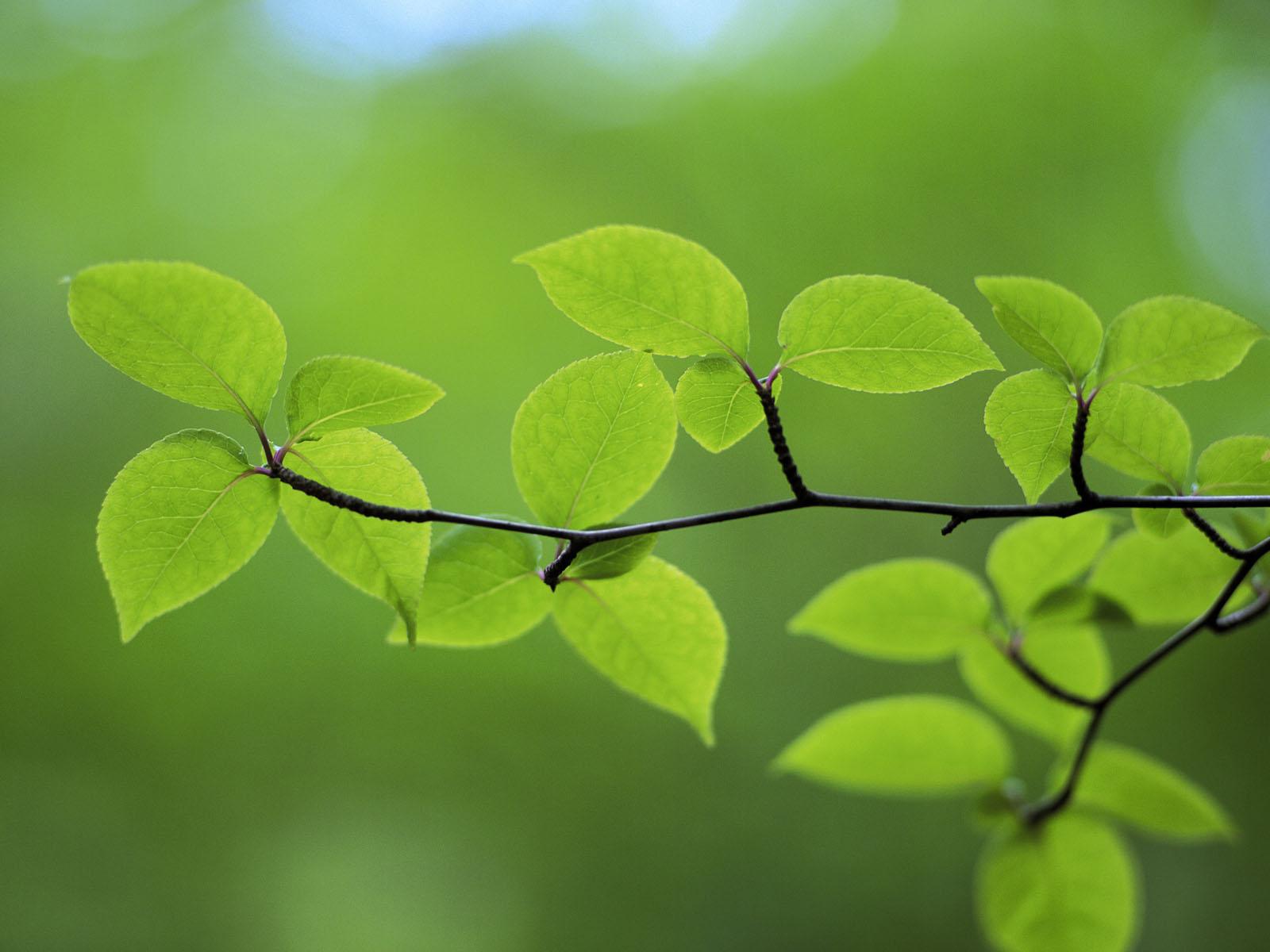 눈에 좋은 바탕화면, 눈이 편한 바탕화면, 눈에 좋은 배경화면, 눈이 편한 배경화면, 바탕화면, 배경화면, 풀잎, 새싹