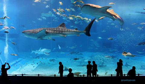 Kuroshio Sea - 2nd largest aquarium tank in the world - WATCH VIDEO ON VIMEO