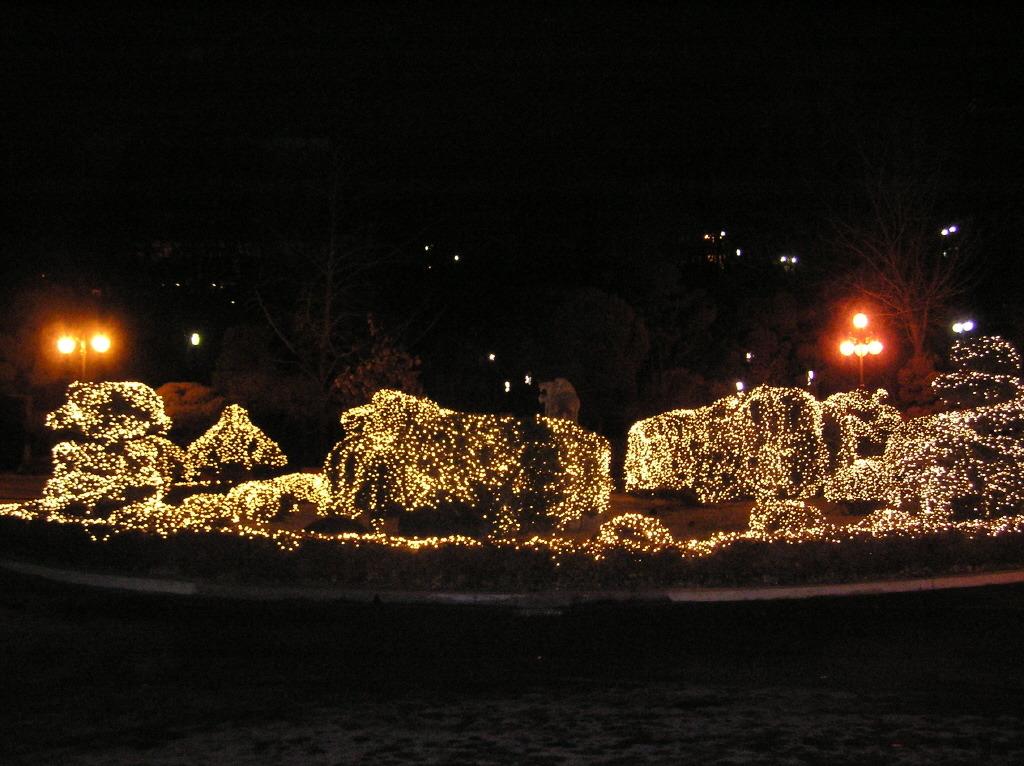 한양대 크리스마스 야간정원 2