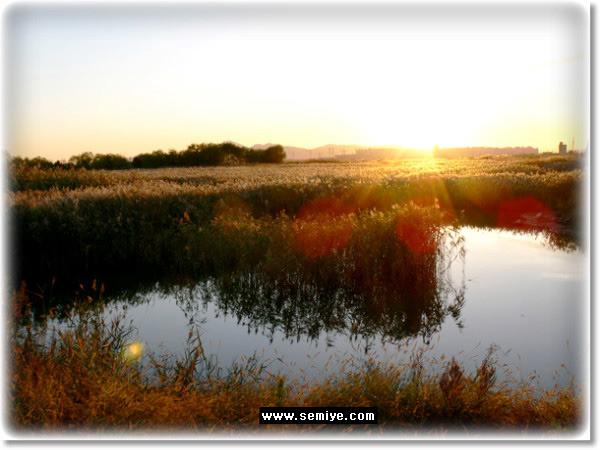 습지-을숙도-명지-신호동-낙동강-새들-샏ㄹ의 천국-을숙도철새공원-사하구 하단동-을숙도-을숙도대교-진해-철새-갈대-낙동강 남단