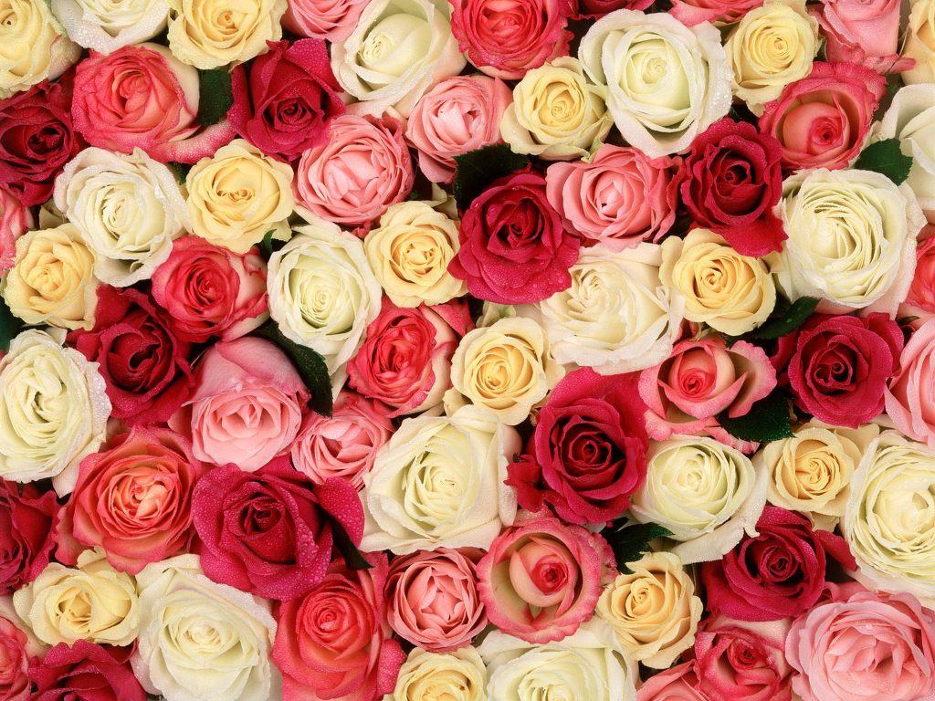 꽃 바탕화면, 고화질 꽃 사진