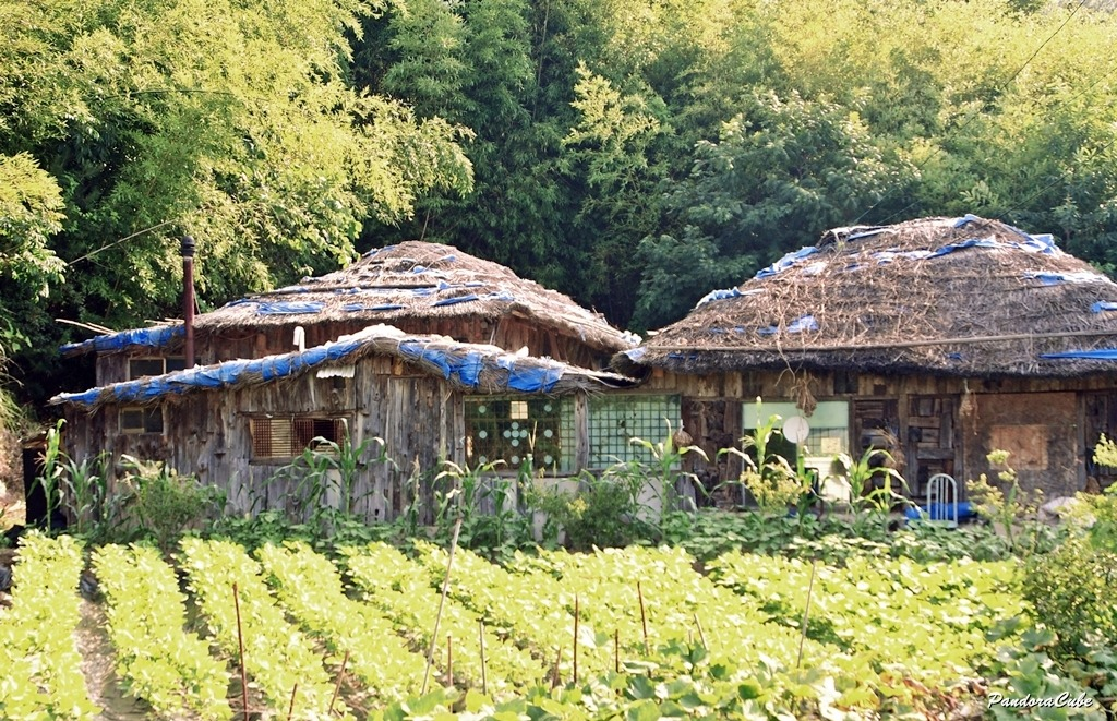 시골집,초가집