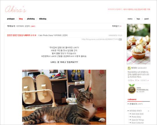귀여운 고양이들을 볼 수 블로그들, 캣 매니아 블로그를 모아 보았습니다.