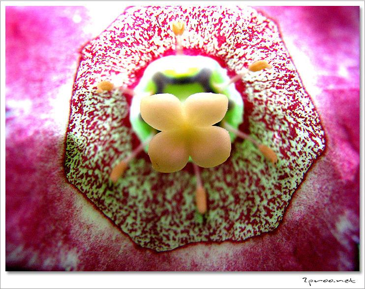 여름 풍경, 여름 꽃 사진, 여름 식물
