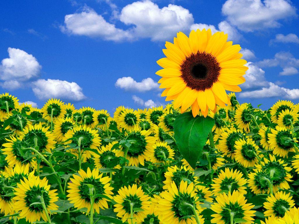 예쁜 꽃 바탕화면 1600 *1200