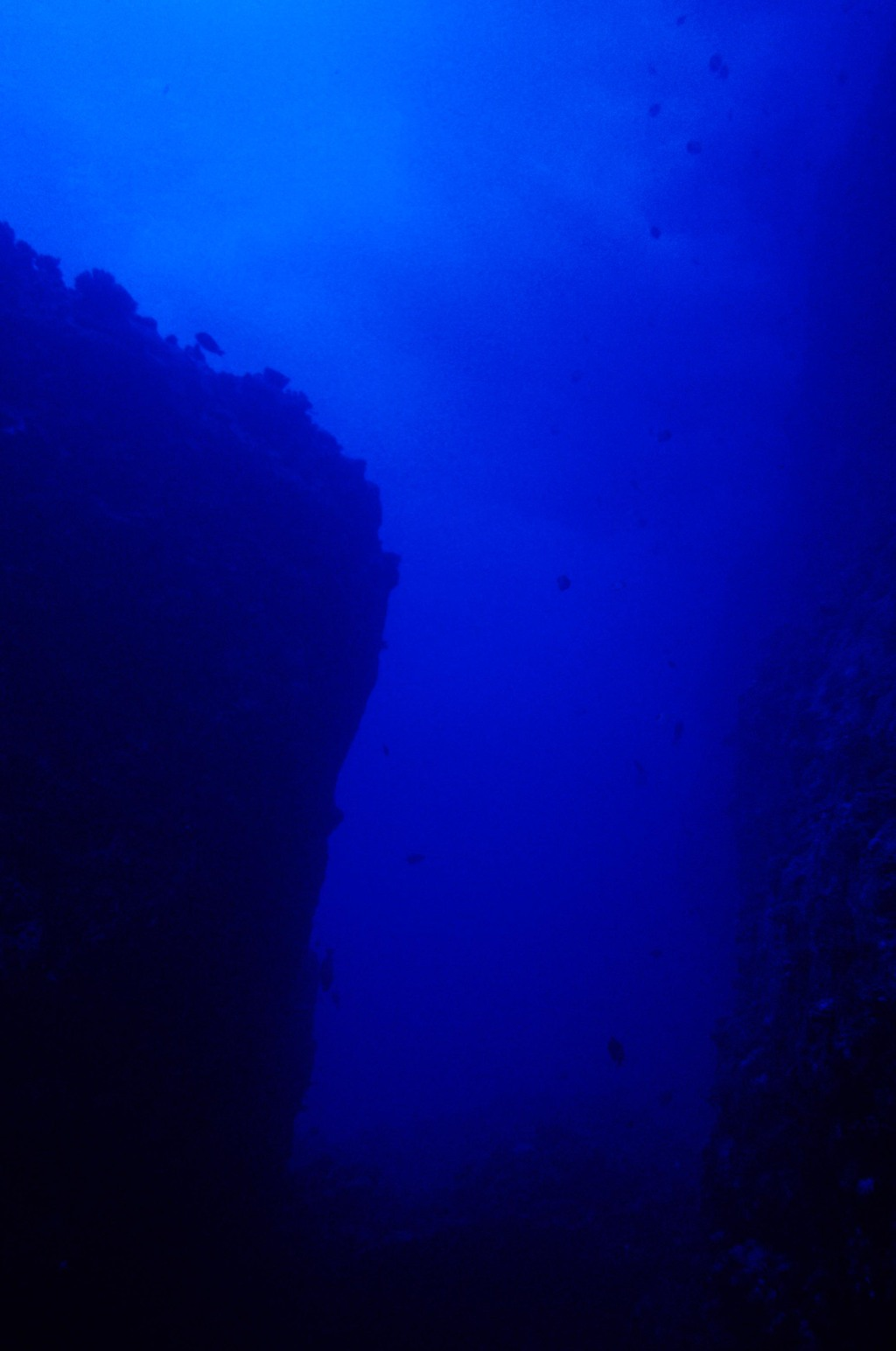 The deep sea, or deep layer[1], is the lowest layer in the ocean, existing below the thermocline, at a depth of 1000 fathoms (1828 m) or more.