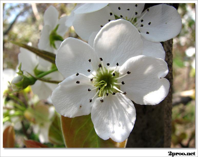 예쁜 꽃 사진, 예쁜 봄 꽃 사진