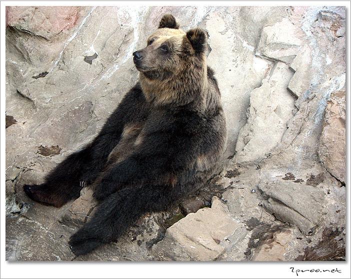 대전동물원 동물 사진