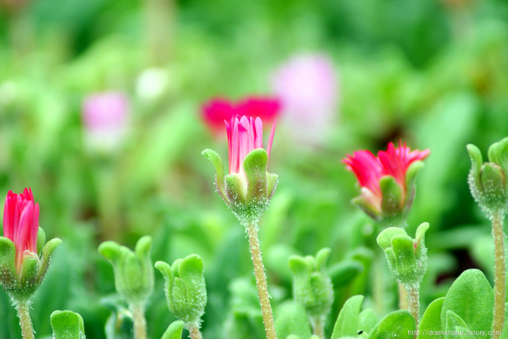 꽃사진 모음