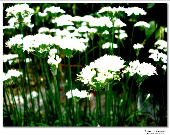 예쁜 꽃사진