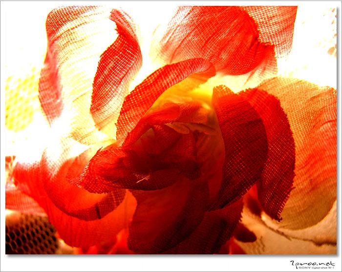 꽃, 꽃 이미지, 꽃사진, 사진, 예쁜 꽃, 예쁜 꽃사진, 예쁜 꽃이미지, 이쁜 꽃, 이쁜 꽃 이미지, 이쁜꽃 사진, 장미꽃 사진, 조화, 조화 사진, 조화 이미지,