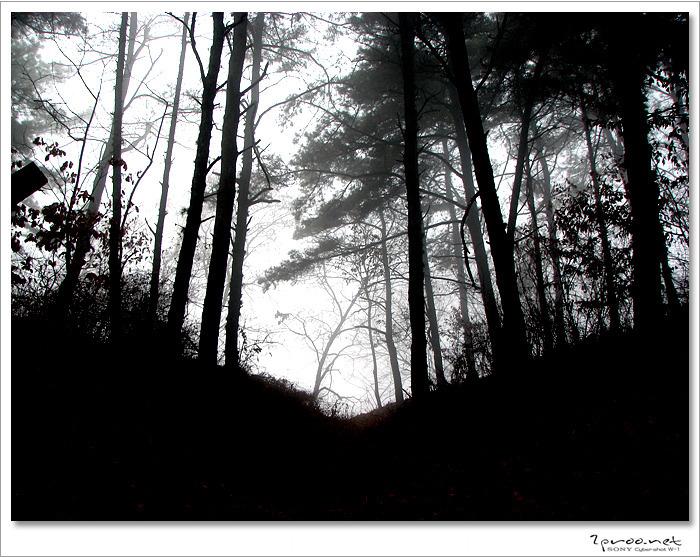 안개낀 숲속 사진