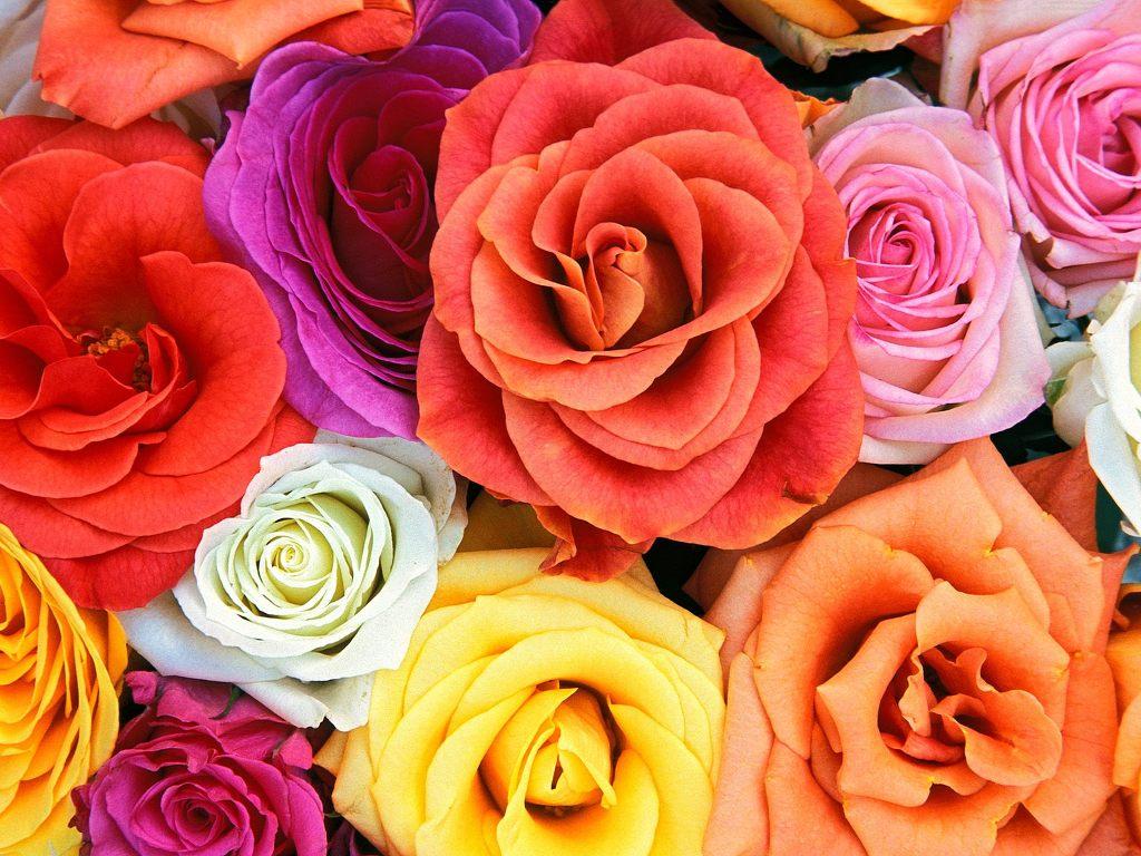 초고화질 꽃 바탕화면