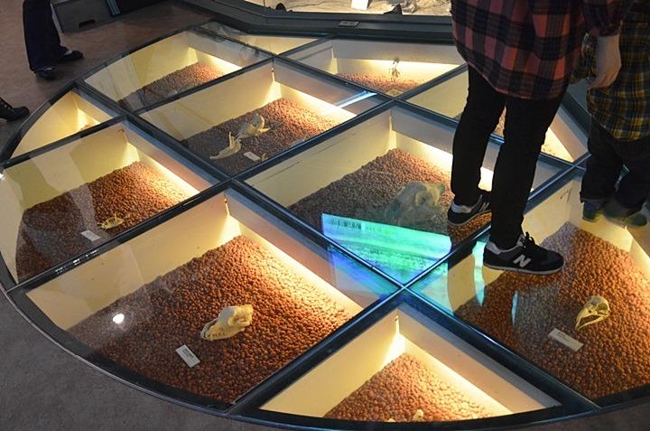 천연기념물센터, 호랑이, 박제, 대전, 박물관, 한밭수목원, 무료관람, 천연기념물 동물, 수목원, 엑스포다리