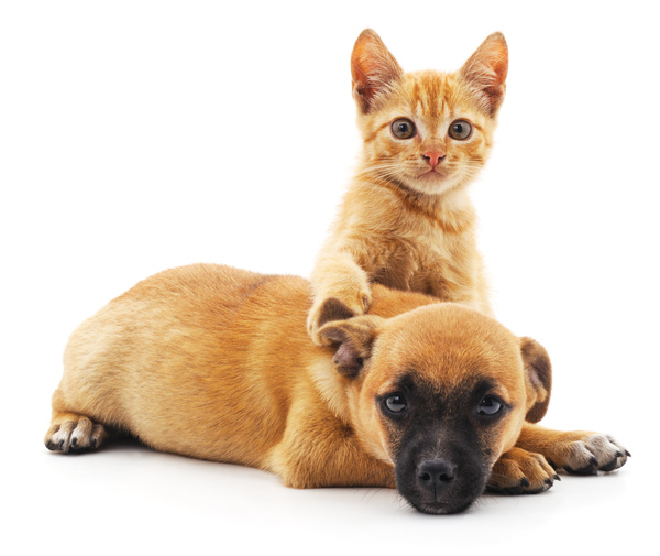 Free Stock Photo JPG file Domineering kitten and puppy lying on the floor HD picture