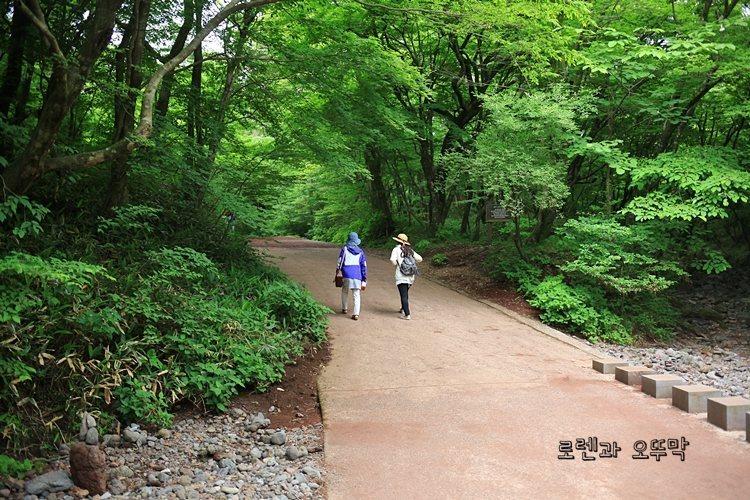 제주도 사려니숲길 짧은 순환로만 걷기7