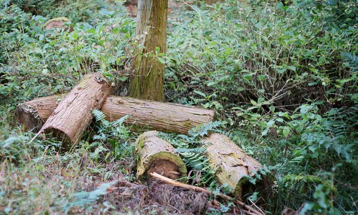 제주사려니숲길 제주도사려니숲길코스 입장료 주차