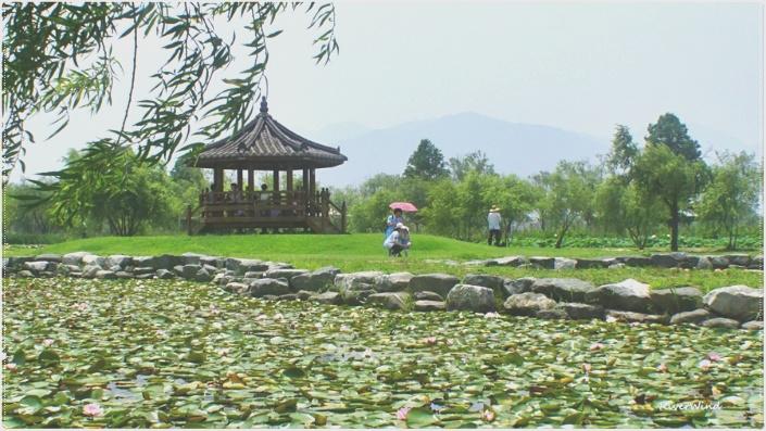 연지(蓮池) 풍경