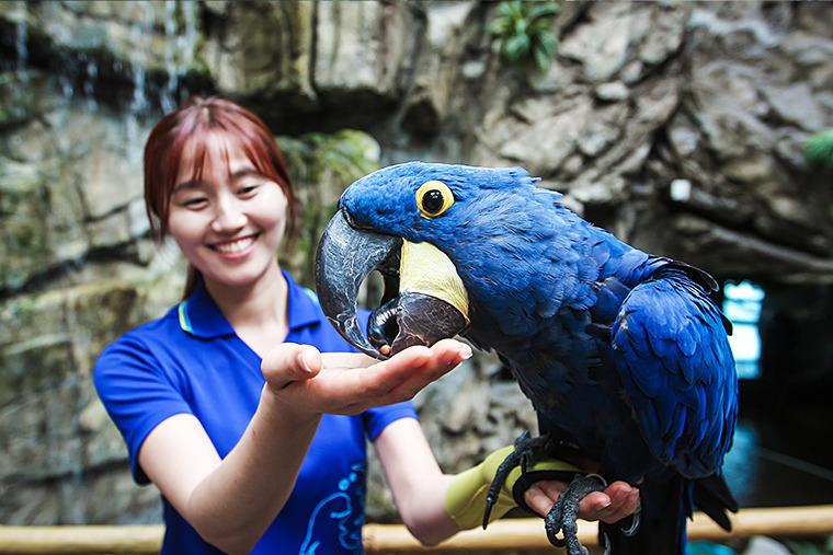 앵무새, 금강앵무, 앵무새 종류, 아쿠아플라넷 일산 앵무새