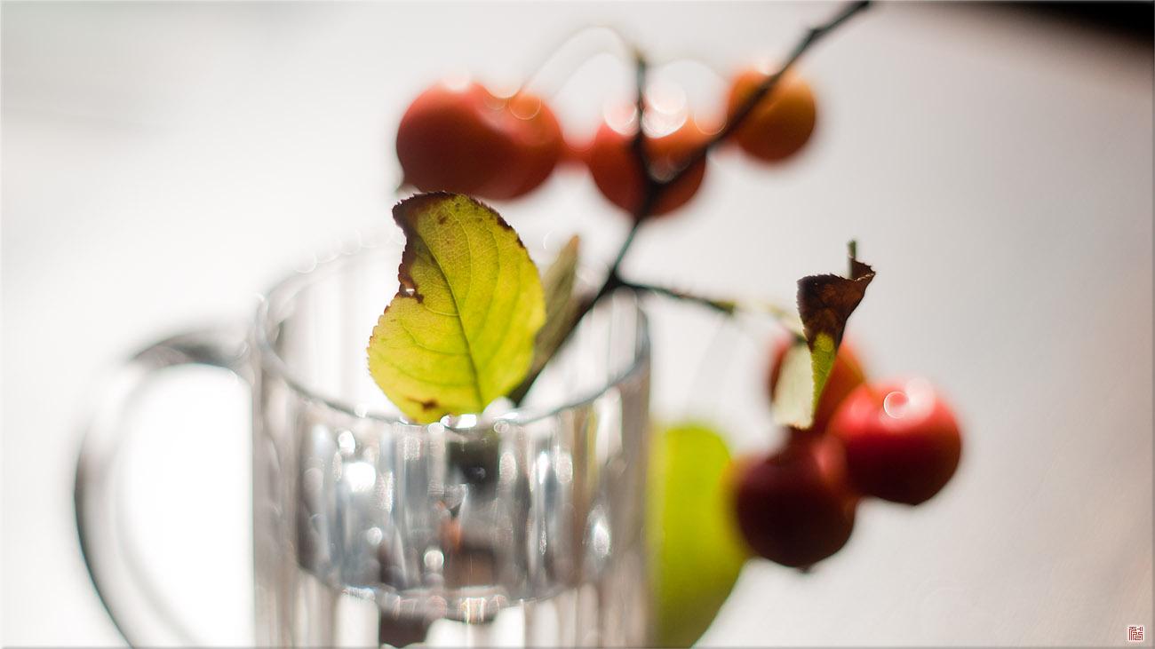 [Sony A350/M42] 한 컵의 가을사랑