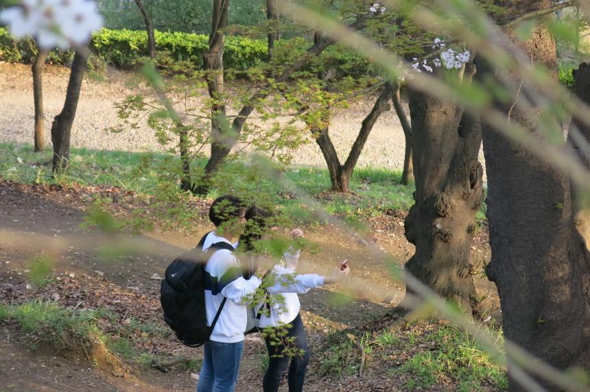 대전벚꽃명소 테미공원에서 인증샷 찰칵