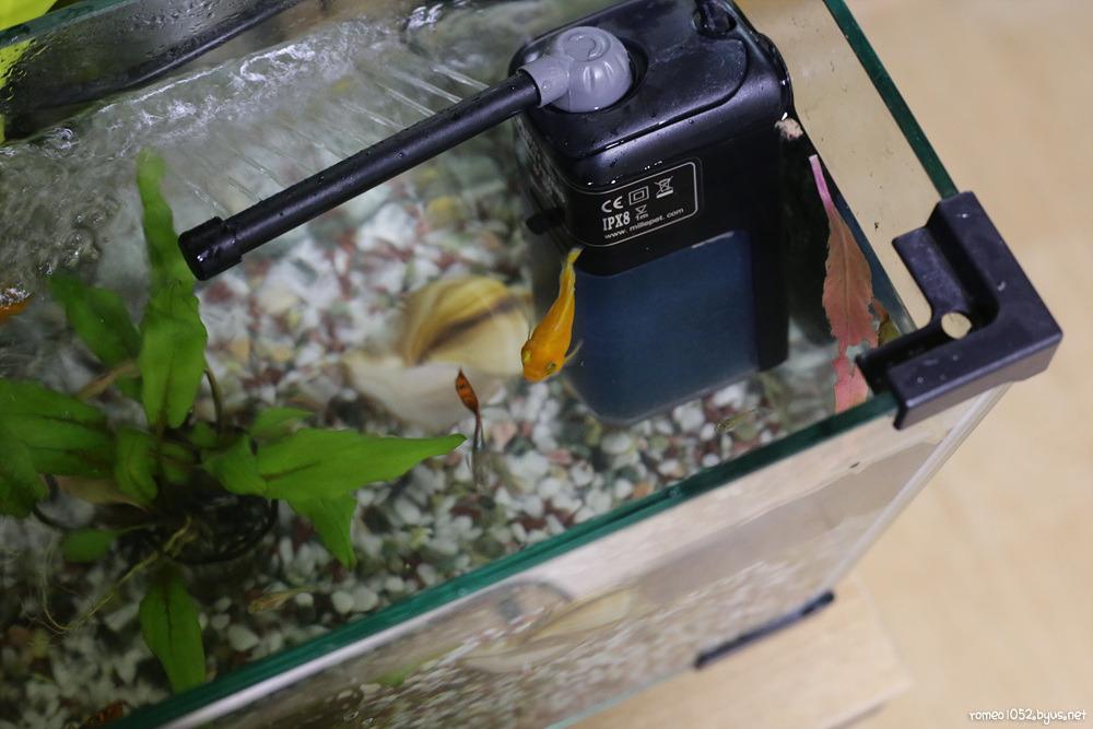 금붕어를 너무 사랑한 그남자 - 나의 작은 조각들 - romeo1052.net
