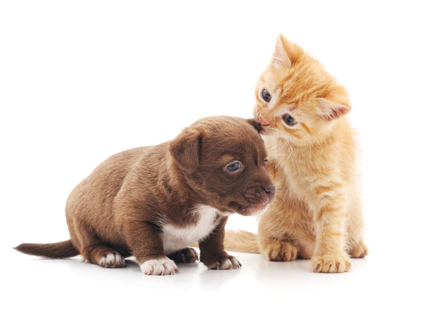 Free Stock Photo JPG file Bully the puppys cat HD picture