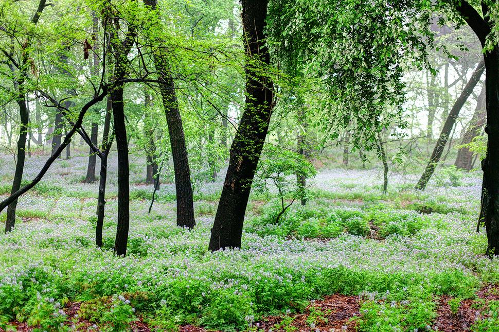 비내리던 종묘공원. 4월의 파릇함과 봄비덕분에 초록이들이 더 신나보였다.