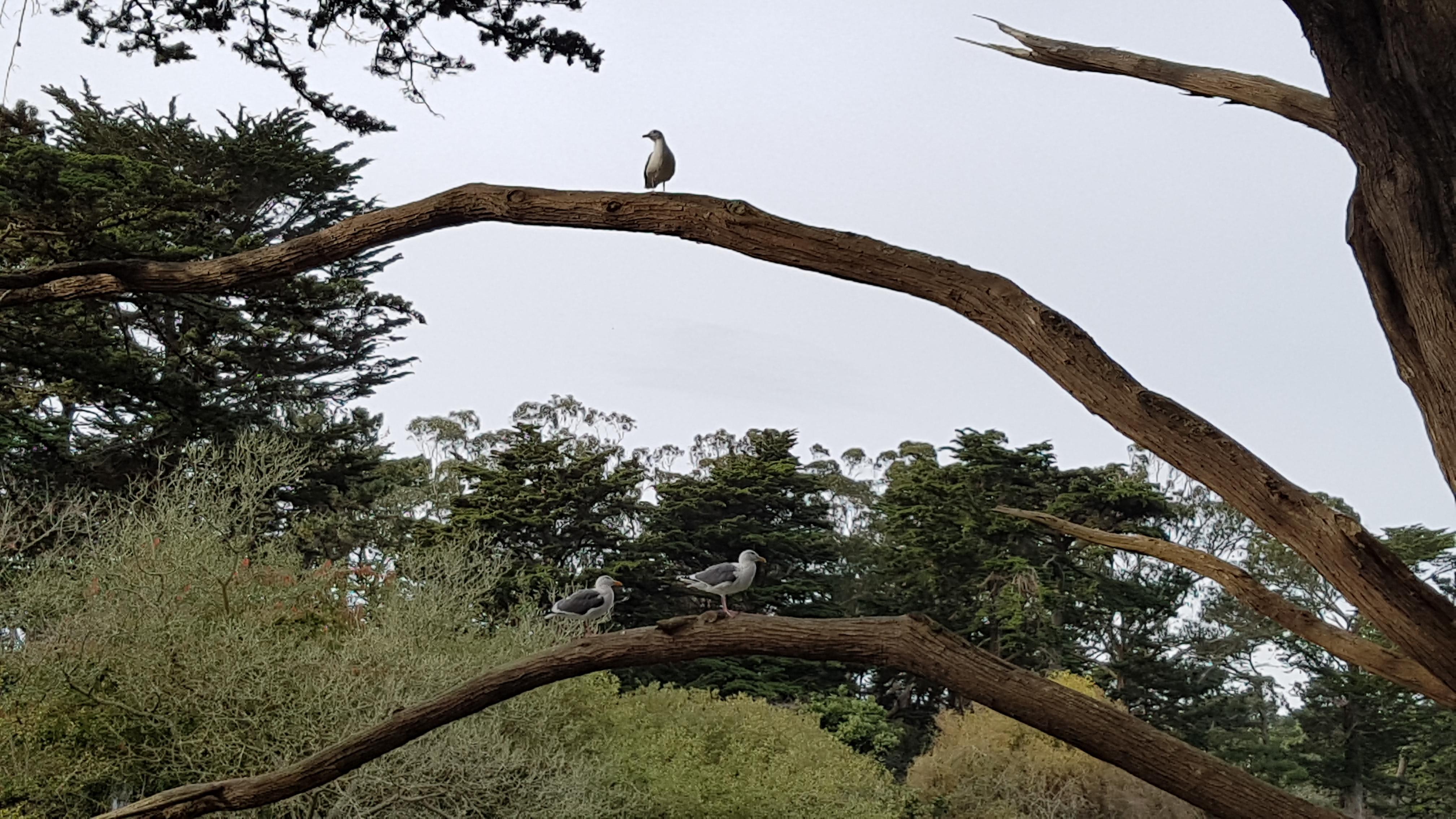 Golden Gate Park, ocean beach, Parrot 아줌마, [샌프란시스코] Golden Gate Park #2, 골든 게이트 파크, 괴기스러운 나무, 귀신 나무, 날것의 느낌, 독서, 돌다리, 돼지왕왕돼지, 멋순이, 멋쟁이, 멍 때리기, 무료, 무료 공원, 물 색, 바다, 벌 서는 오토바이, 벌 서며 타는 오토바이, 벌 서며 타는 자전거, 보트 대여, 보트 렌탈, 비둘기, 새, 새 떼, 새 먹이, 샌프란시스코, 숨은 그림 찾기, 아이패드 독서, 안내 지도, 앵무새, 앵무새 아줌마, 언덕, 연인, 엽서 사진, 영화의 한 장면, 오션 비치, 오솔길, 유랑, 입장료, 지도, 천둥오리, 초록색, 칠면조, 특이한 모양, 패달 보트, 해리포터 동네, 호수