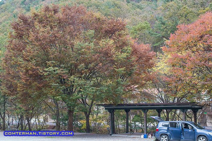 남이자연휴양림 나무
