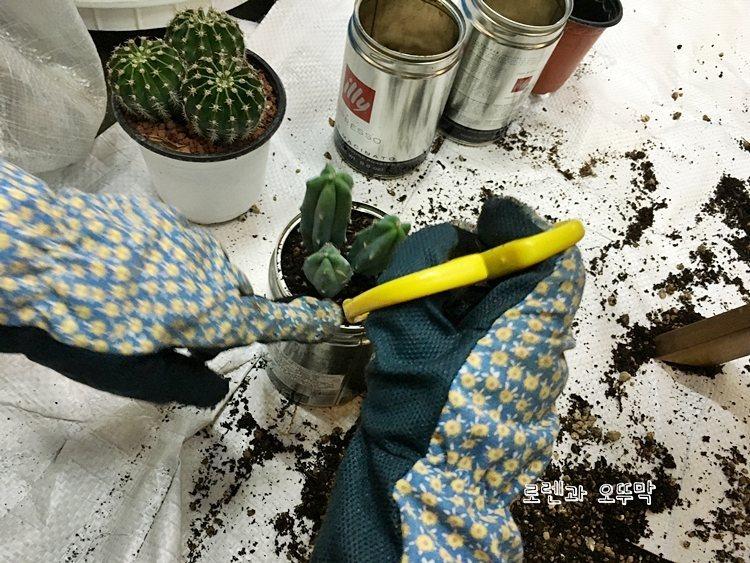 미니 선인장 화분 만들기(일리 커피캔 활용)8