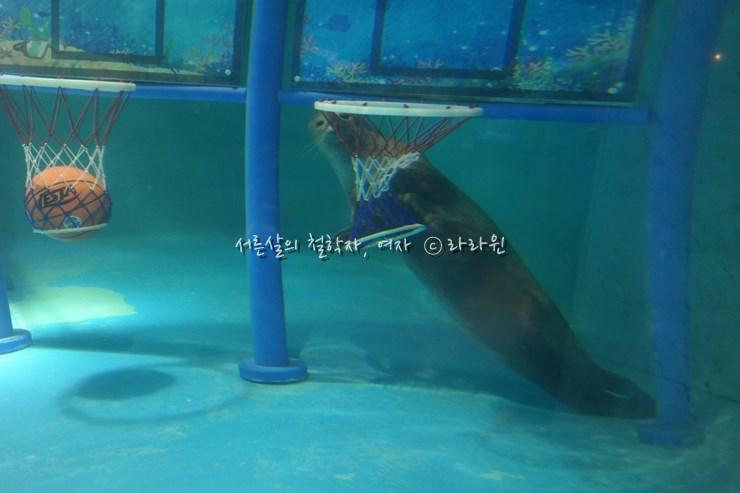 바다표범, 63씨월드,