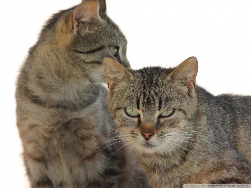 다정한 두마리 고양이 바탕화면 아이폰 배경화면