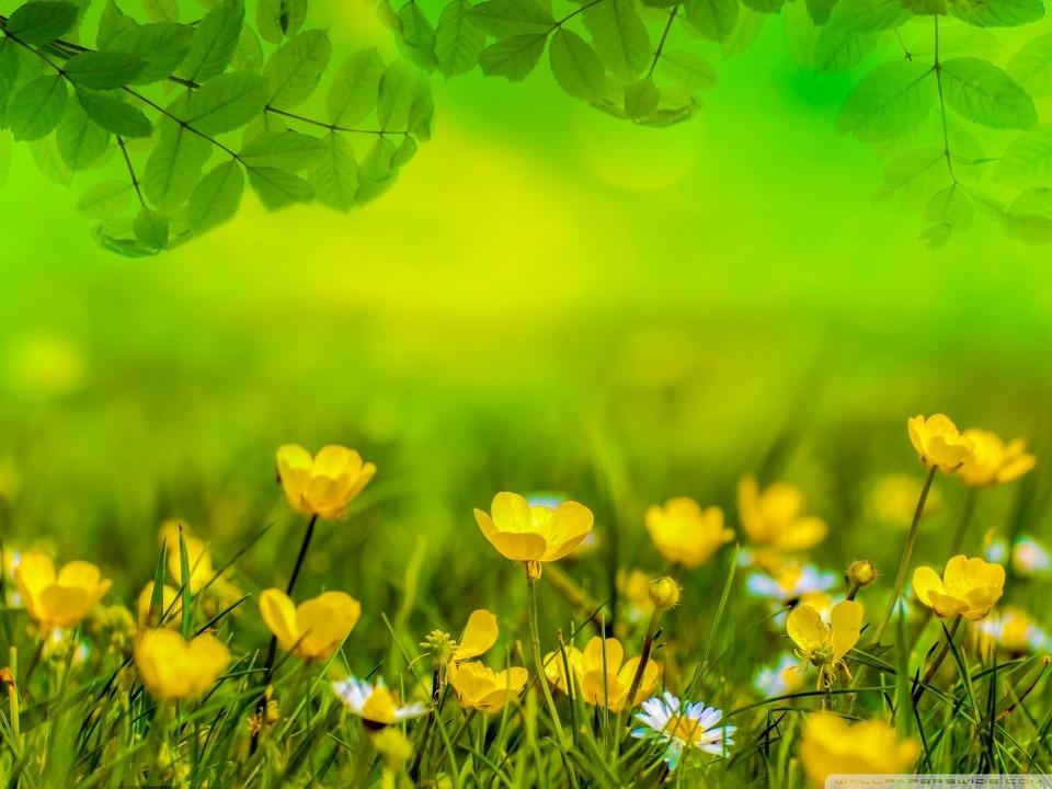 심플 바탕화면 아름다운 봄 초원