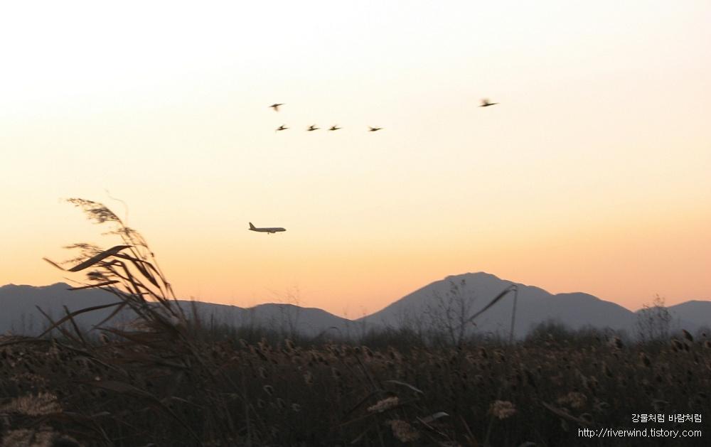철새와 비행기와 석양