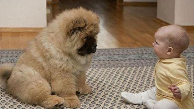 아기와 애완동물
