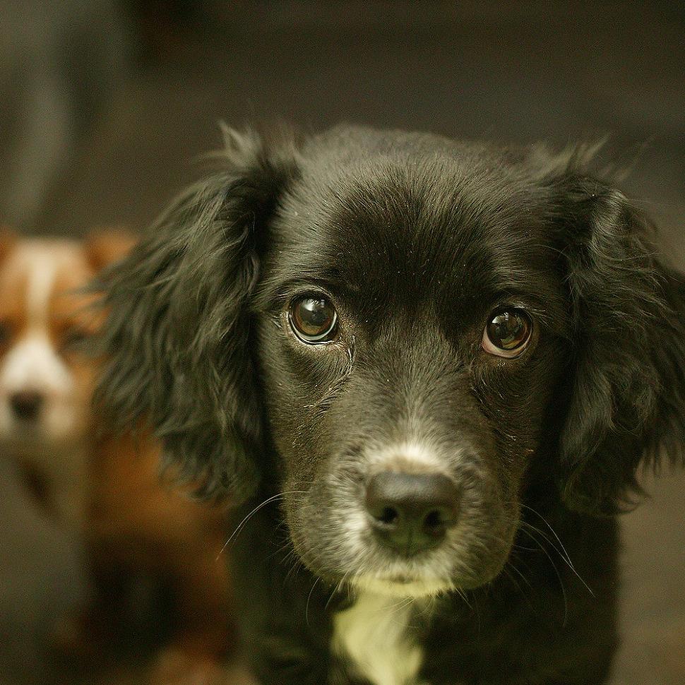 눈망울이 똘망똘망한 4개월된 까만털의 강아지 사진. 깜둥이라 이름붙인 나의 강아지.