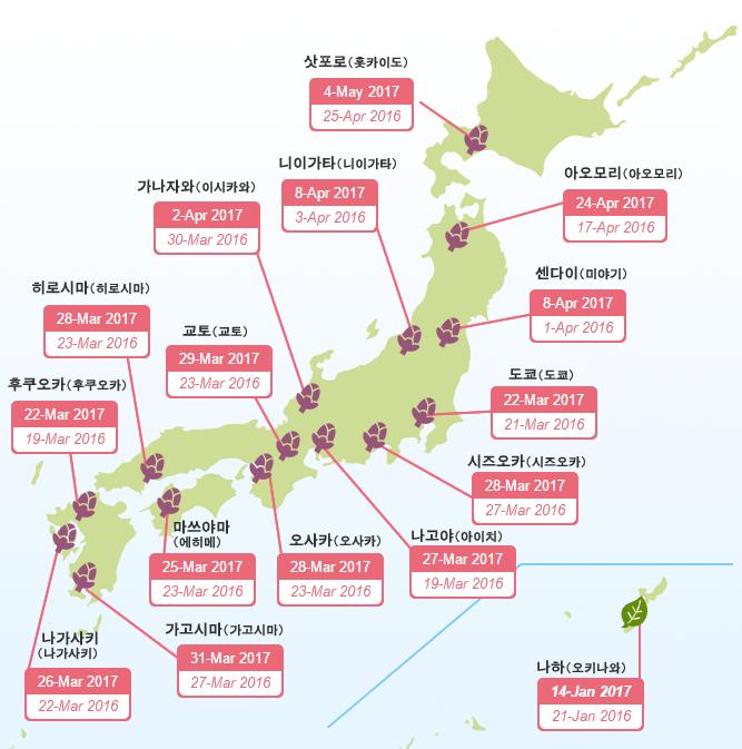일본 벚꽃 개화시기_1