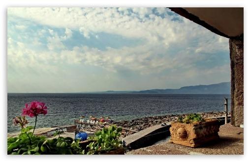 한송이 붉은 꽃 바다 풍경 바탕화면,배경화면