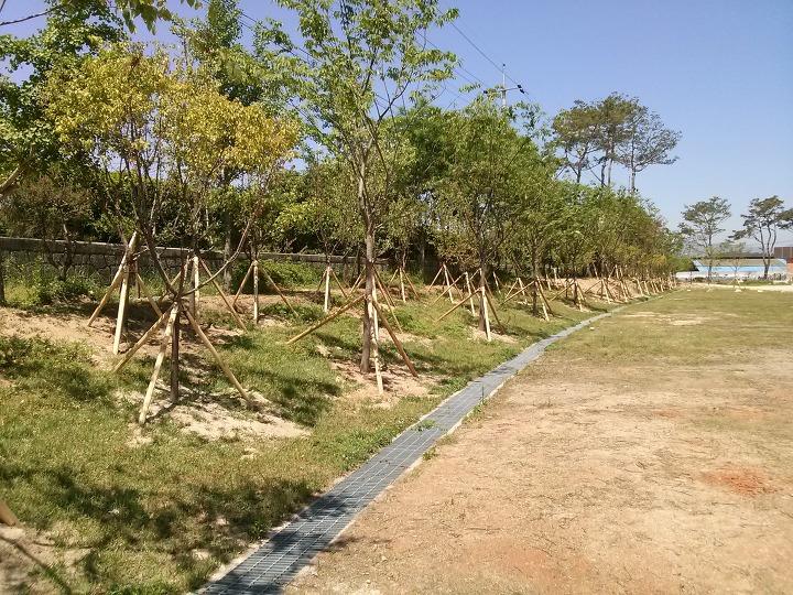 남원용북중학교 학교숲 경계숲