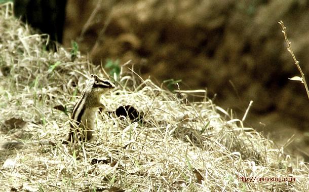 다람쥐 squirrel