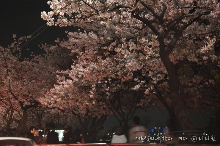 여의도 벚꽃 축제, 여의도 치킨 배달,