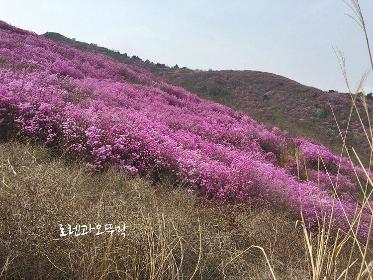 핑크빛 영취산 진달래축제 '4월 전라도 여행지 추천!18