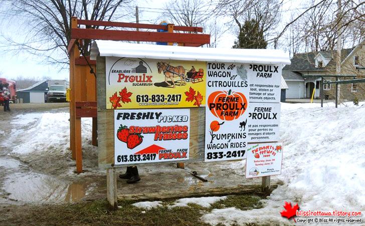 캐나다인이 3~4월이 되면 농장을 찾아가는 이유