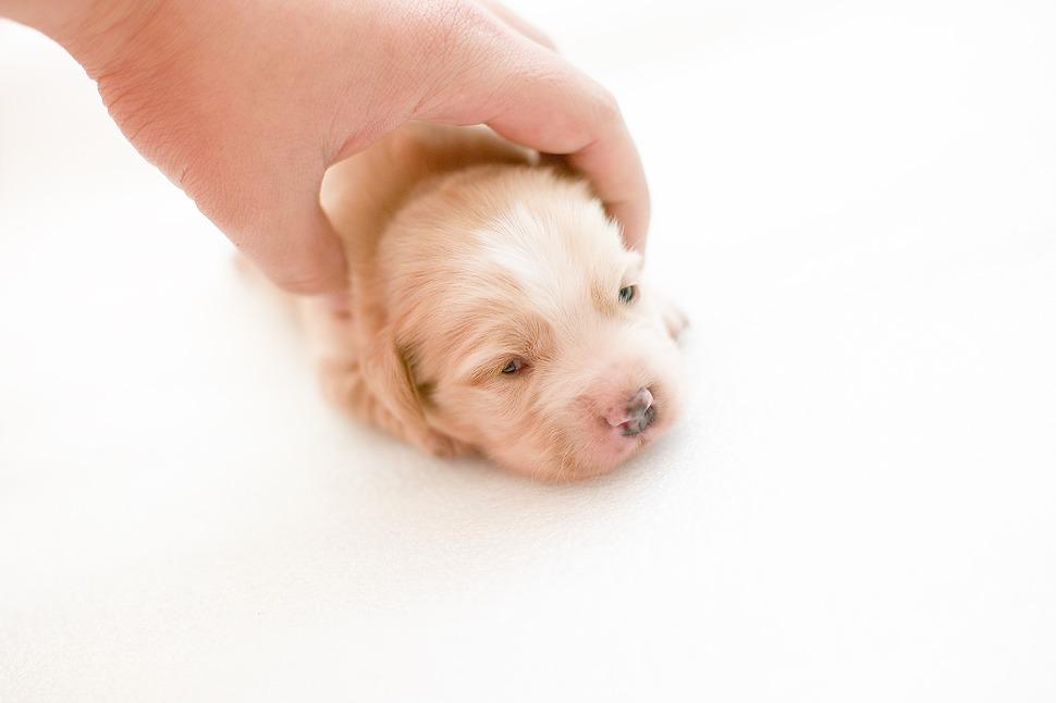 태어난지 2주된 강아지 모습-젤 이쁠때