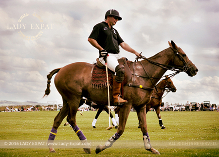 Polo Pony. Lady Expat.