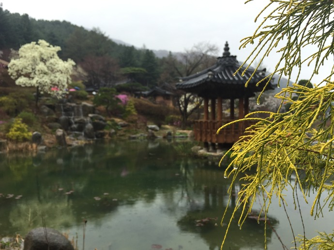 아침고요수목원 봄나들이 봄꽃축제 비오는날! 150419